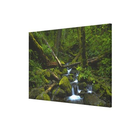 Corriente templada de la selva tropical en el río  lienzo envuelto para galerias