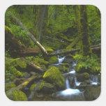 Corriente templada de la selva tropical en el río pegatina cuadrada