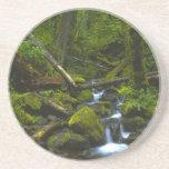 Corriente templada de la selva tropical en el río  posavasos personalizados