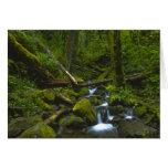 Corriente templada de la selva tropical en el río  tarjeta de felicitación