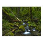 Corriente templada de la selva tropical en el río tarjeta postal