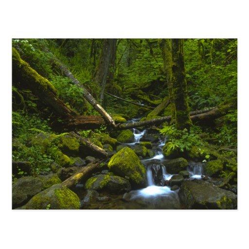 Corriente templada de la selva tropical en el río  postales
