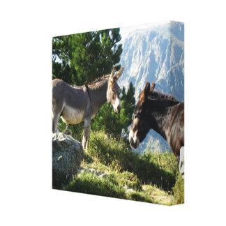 Corsica donkey canvas print