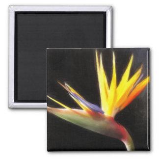 Corte las flores 3 de la ave del paraíso Painterly Imán Cuadrado