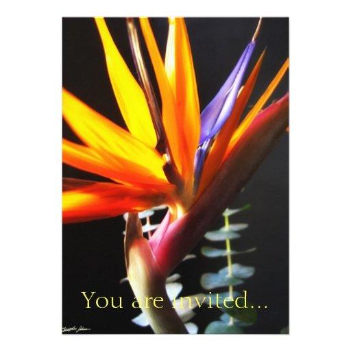 Corte las flores 4 de la ave del paraíso