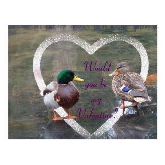 Cortejo de los patos silvestres postales