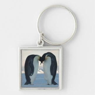 Cortejo del pingüino de emperador llaveros personalizados