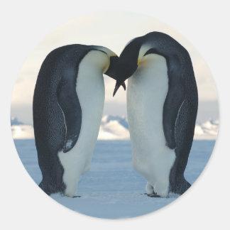 Cortejo del pingüino de emperador pegatina redonda