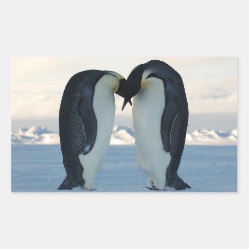 Cortejo del pingüino de emperador pegatina rectangular