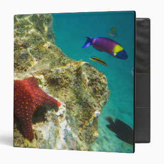 Cortez Rainbow Wrasse male and female and sea Vinyl Binder