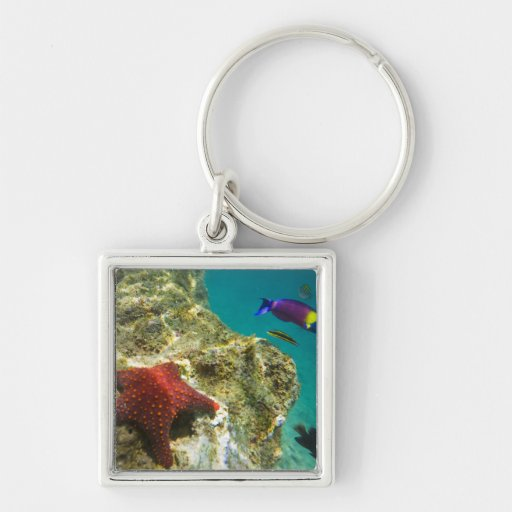 Cortez Rainbow Wrasse male and female and sea Keychain