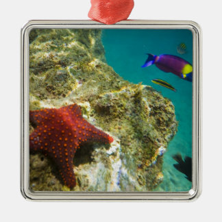 Cortez Rainbow Wrasse male and female and sea Metal Ornament
