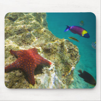 Cortez Rainbow Wrasse male and female and sea Mouse Pad