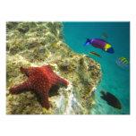 Cortez Rainbow Wrasse male and female and sea Photo Print