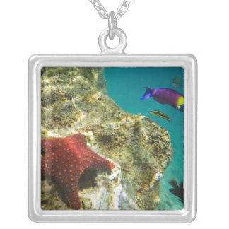 Cortez Rainbow Wrasse male and female and sea Silver Plated Necklace