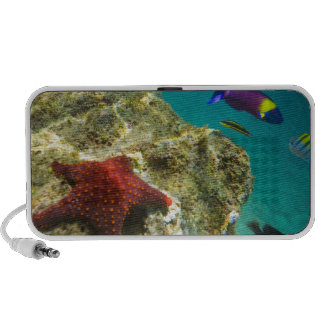 Cortez Rainbow Wrasse male and female and sea iPhone Speakers