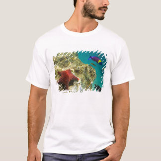 Cortez Rainbow Wrasse male and female and sea T-Shirt