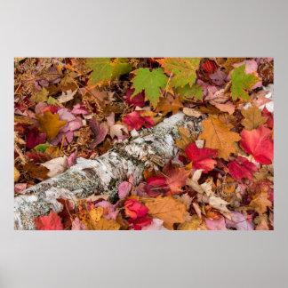 Corteza de abedul de la cubierta de las hojas de poster