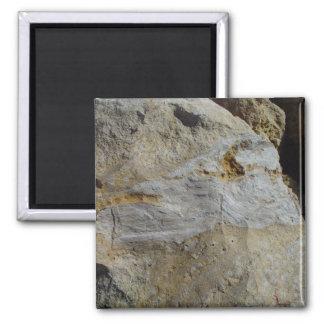 Corteza de Agatified en piedra caliza en la playa  Iman