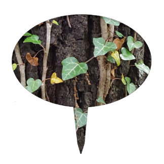 Corteza de árbol al aire libre con la hiedra verde figura de tarta