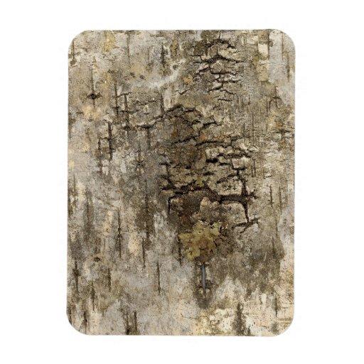 Corteza de árbol bonita iman