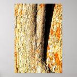 Corteza de árbol con tonos anaranjados impresiones