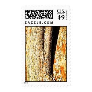 Corteza de árbol con tonos anaranjados envio