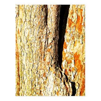 Corteza de árbol con tonos anaranjados tarjeta postal