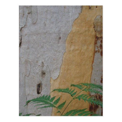 Corteza de árbol de Karri y hoja del helecho Postal