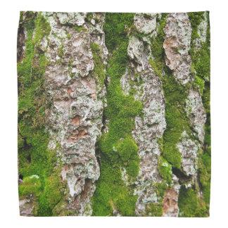 Corteza de árbol de pino con el musgo bandanas