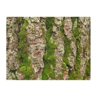 Corteza de árbol de pino con el musgo impresiones en madera