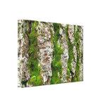 Corteza de árbol de pino con el musgo impresiones en lona