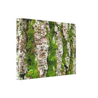 Corteza de árbol de pino con el musgo lona estirada galerías