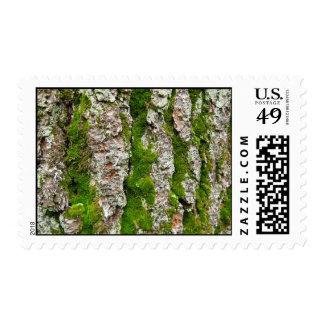 Corteza de árbol de pino con el musgo - medio franqueo
