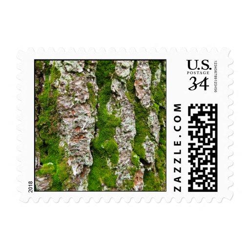 Corteza de árbol de pino con el musgo - pequeño sello