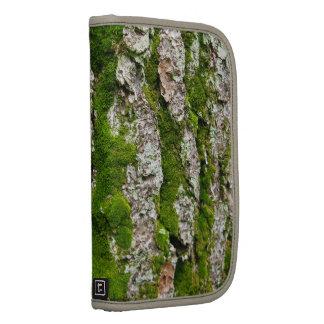 Corteza de árbol de pino con el musgo planificadores