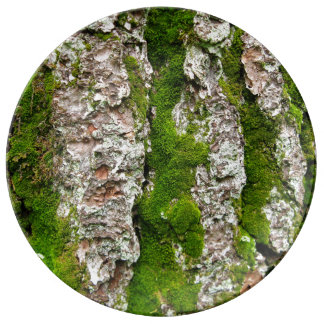 Corteza de árbol de pino con el musgo platos de cerámica