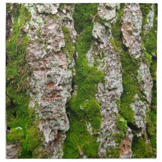 Corteza de árbol de pino con el musgo servilleta de papel