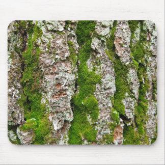 Corteza de árbol de pino con el musgo alfombrilla de ratón