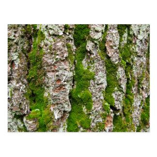 Corteza de árbol de pino con el musgo postal