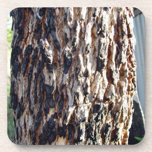 Corteza de árbol de Redgum Posavaso