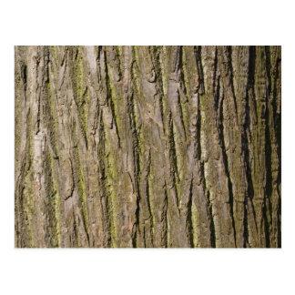 Corteza de árbol II Postal