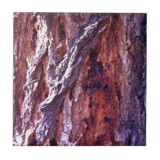 Corteza de árbol madura de goma de la secoya en azulejo cuadrado pequeño