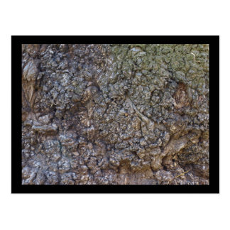 Corteza de árbol postal