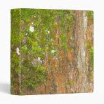 Corteza de árbol y carpeta del musgo