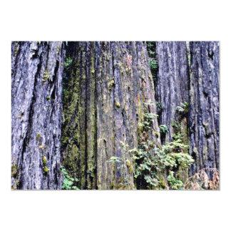 Corteza de los árboles antiguos de la secoya invitaciones personalizada