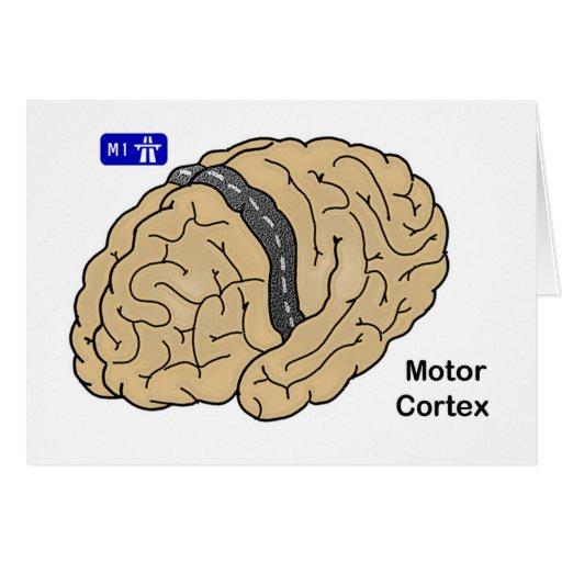 Corteza de motor tarjeta