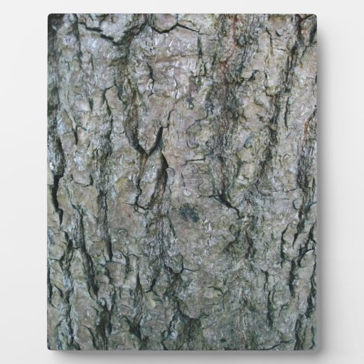 Corteza de plata placas con fotos