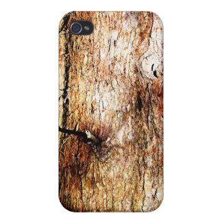 Corteza de roble vieja iPhone 4 fundas