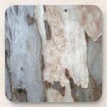 Corteza de un árbol de eucalipto posavasos de bebida